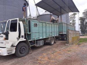 Megaoperativo: esclarecen millonario robo de trigo en campo de San Cayetano