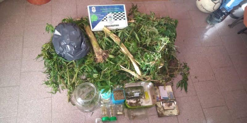Secuestran más de 4 kilos de marihuana en Chaves: 5200 semillas, picadura y restos de plantas