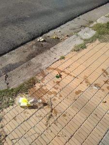 Denuncian envenenamiento de perros en la zona de Plaza del Árbol