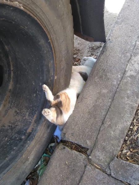 Nuevo caso de envenenamiento en Brown y Azcuénaga: aconsejan no salir a la calle con mascotas