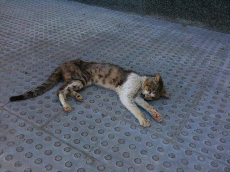 Advertencia de PACMA sobre los envenenamientos de gatos y perros
