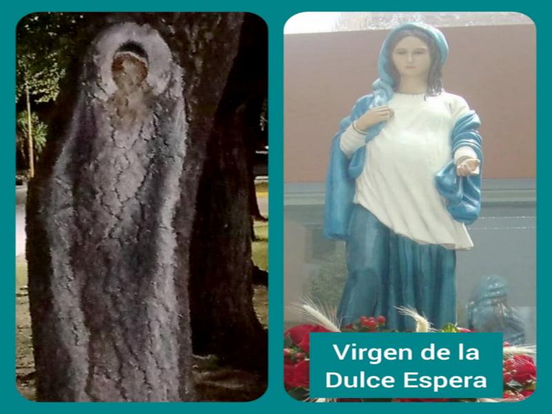 Chaves: Apareció una imagen de la Virgen en el tronco de un árbol