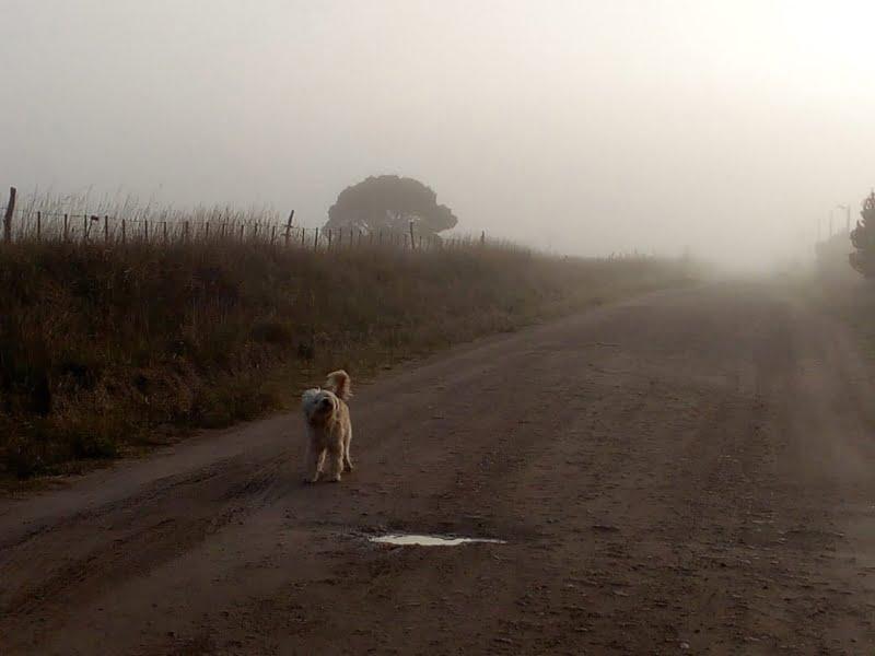 Amanecer con neblina en Claromecó