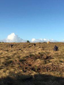 Claromecó: reforestación de zonas afectadas por incendios