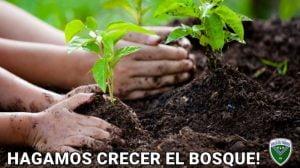 """Proyecto de forestación de Villa del Parque """"hagamos crecer el bosque"""""""