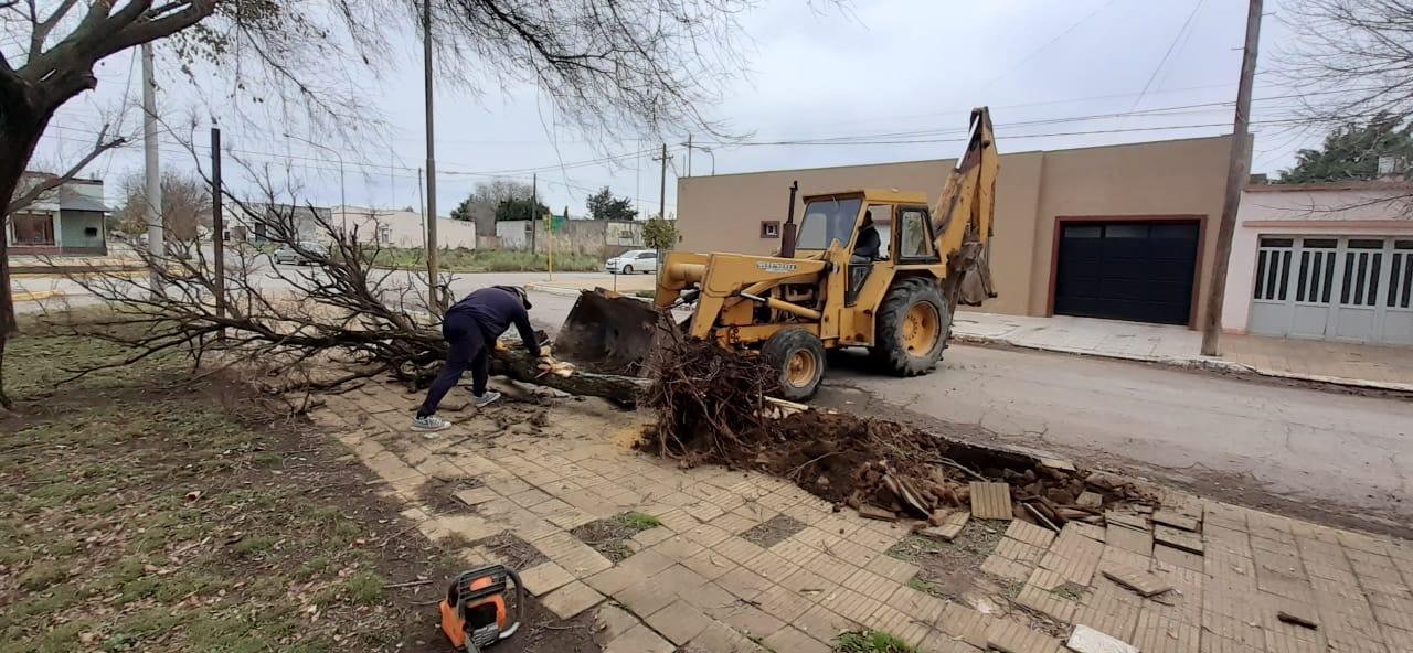 Plantan fresnos y acondicionan veredas del Hospital municipal de Chaves