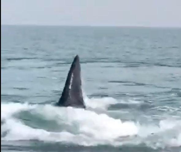 Pesca y ballenas frente a Claromecó (Videos)