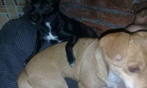 Bahía Blanca: les robaron a sus tres perras y ofrecen un auto de recompensa