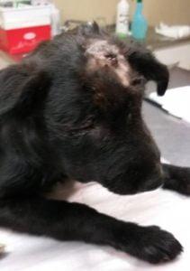 Denuncian penalmente al hombre que le fracturó el cráneo a una perra en Cascallares
