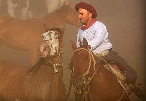 """Di Noyo y las domas virtuales: """"Prueban los caballos y suben el video del mejor"""""""