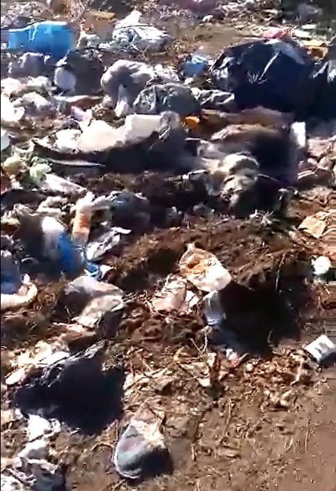 Video: denuncian basurero clandestino en Reina Margarita al 2000