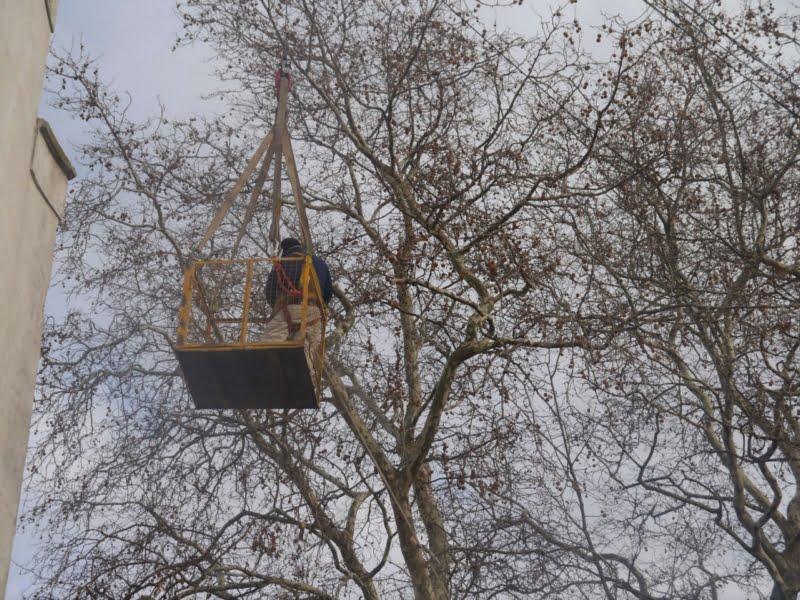 Paseos Públicos controla como los vecinos realizan poda de árboles en la ciudad