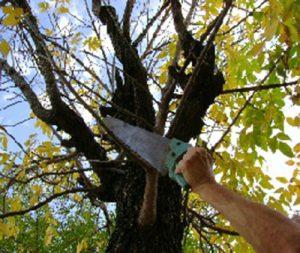 Medidas a tener en cuenta para el retiro de ramas en Claromecó