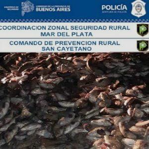 Decomisaron y desnaturalizaron 9.220 kilos de pescado que trasladaban de Claromecó a Mar del Plata