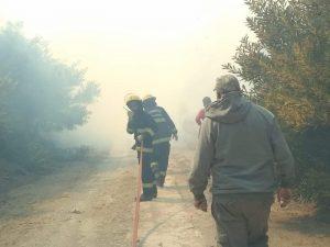 """Estaría """"bastante controlado"""" el incendio en la Estación Forestal"""