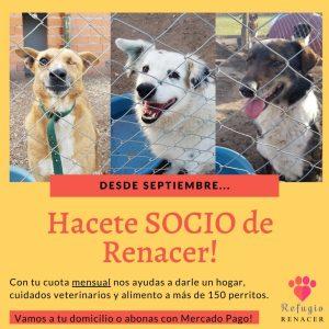 Sumate como Socio en Renacer, y colaborá con más de 150 perritos