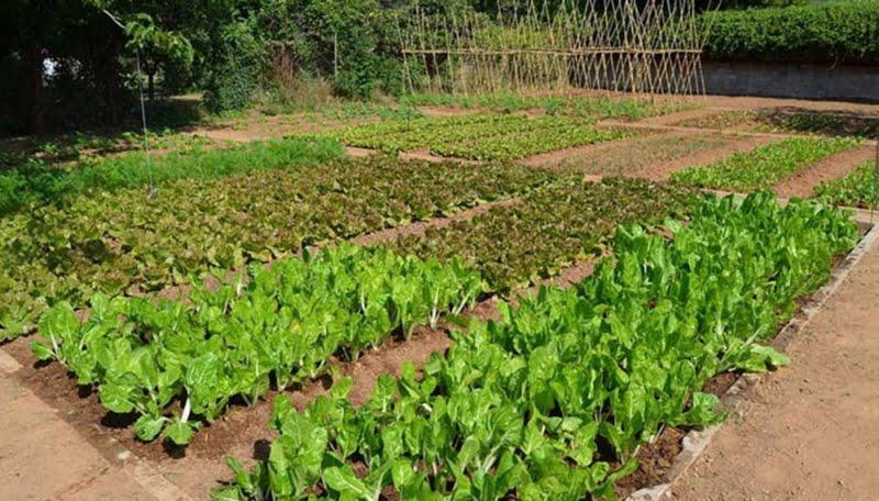 La horticultura se mantiene con expectativa para la temporada alta