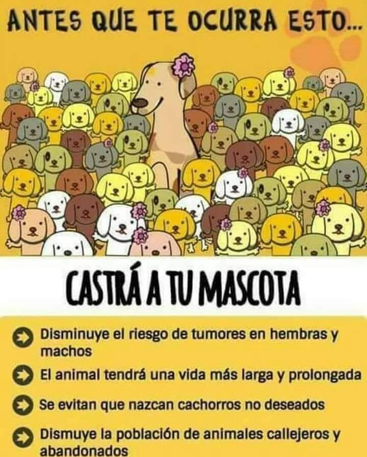 Claromecó: Campaña gratuita de castración de mascotas