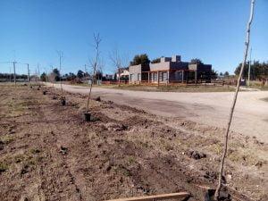 Comenzó la plantación de árboles en la plaza Médano Verde en Claromecó