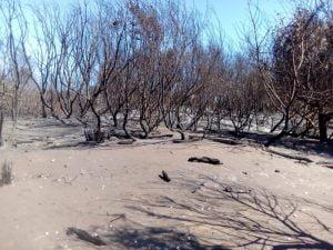 Recorrida fotográfica por la zona del Vivero afectada por el incendio
