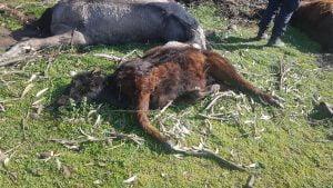 Análisis atribuyen a un agroquímico la mortandad de animales en un campo de Chaves