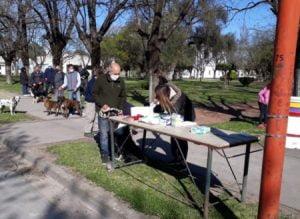 Vacunación antirrábica gratuita de perros y gatos en Orense
