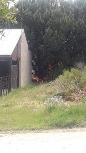 Bomberos sofocaron incendio de pinos en Claromecó