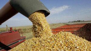 El Gobierno suspendió las exportaciones de maíz: sorpresa e incertidumbre entre los productores