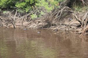 Mate en mano en Puerto Mosquito