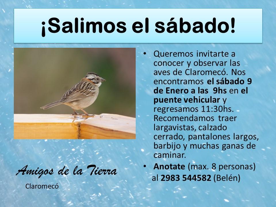 Invitan a jornada de avistaje de aves en Claromecó