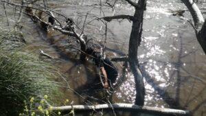 Ingresó al arroyo Claromecó, no sabe nadar, desapareció. Hay operativo de búsqueda