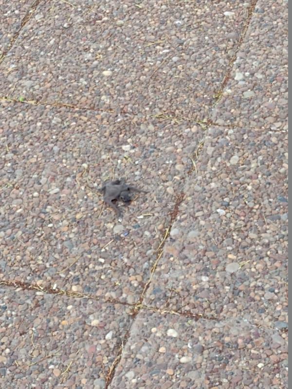 Hallaron pichón de murciélago en pleno centro