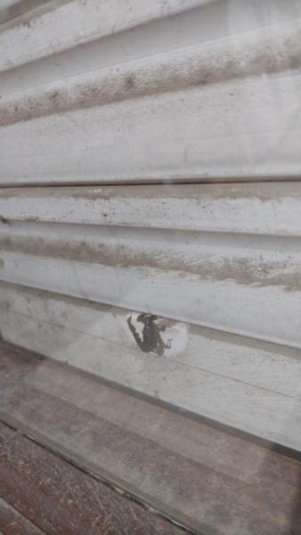 Vecinos denuncian la aparición de alacranes en Tres Arroyos