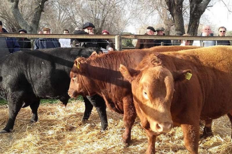 Arzoz y Cía. organiza un remate de gordo, invernada y cría para el 5 de marzo