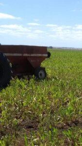 Robaron implementos agrícolas en un campo cerca de Indio Rico