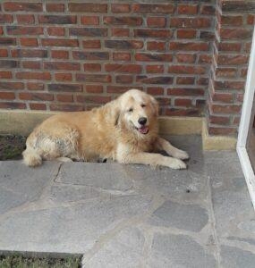 Buscan al dueño de un perro extraviado