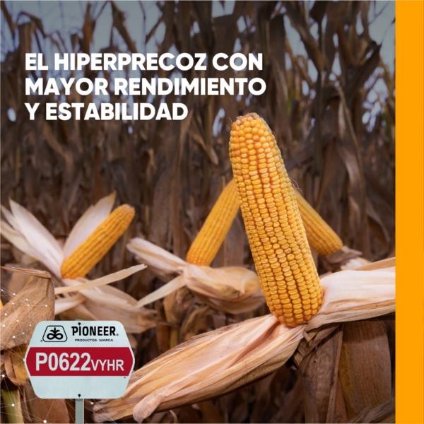 """Don Calde y la venta de semillas en la zona: """"el precio de los granos está acompañando y hay mucha intensión de maíz"""""""
