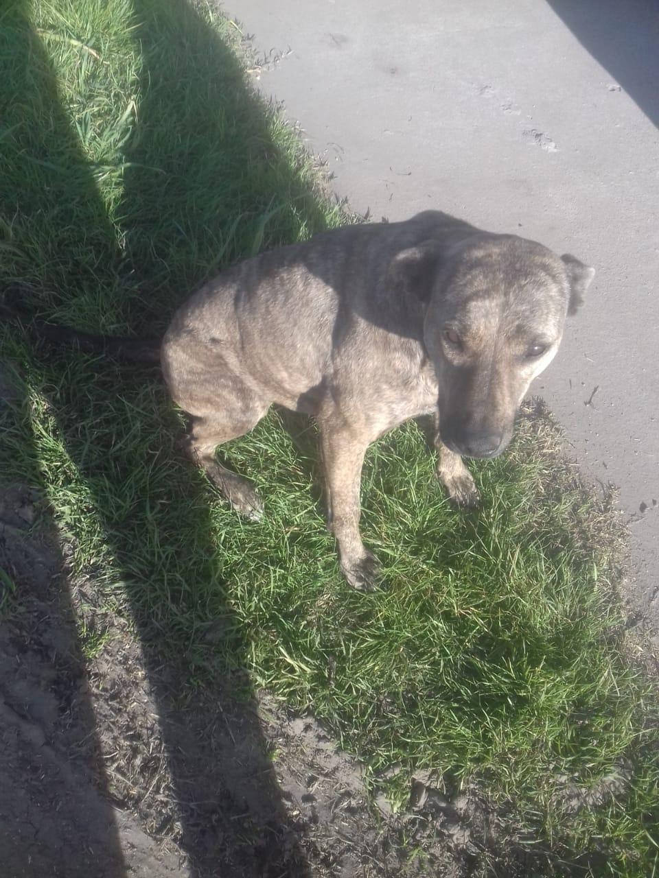 Encontraron una perra y buscan a su dueño