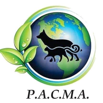 Dia Mundial del Perro: PACMA concientiza sobre la castración, la adopción y la tenencia responsable